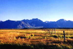 Eastern Sierra Meadow