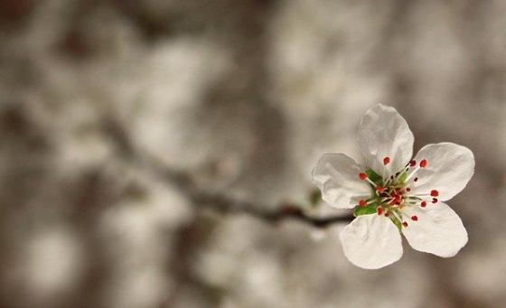 Intervals Spring Update